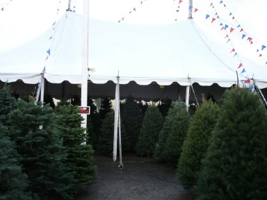 Christmas tree lot